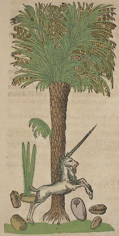 His 1546 herbal had 550 woodcuts by David Kandel. Date Palm with Unicorn. Medieval Life, Medieval Art, Fantasy Creatures, Mythical Creatures, Botanical Illustration, Illustration Art, Dragons, Sphinx, Pressed Flower Art