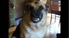 Funny Dog Talking Bacon Dog Teaser