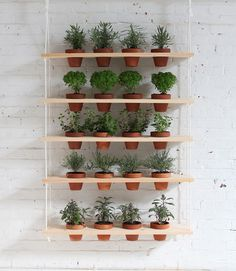 HomeMade Modern DIY Hanging Garden: This DIY vertical garden is an easy-to-make project that can turn a window into a beautiful and productive herb garden. Get Complete Step-by-Step Instructions at RYOBI Nation. Hanging Herb Gardens, Hanging Herbs, Diy Hanging Planter, Diy Planters, Hanging Pots, Planter Garden, Potted Garden, Planter Ideas, Hanging Flowers