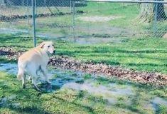 Stevie-koira+ilakoi+lätäkössä+herttaisella+videolla Stevia, Dogs, Animals, Instagram, Animales, Animaux, Doggies, Animal, Pet Dogs