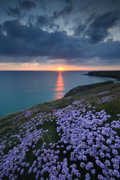 Sunset over the ocean with flowers and a rocky shoreline. Nature in its glory. Beautiful Sunset, Beautiful World, Beautiful Places, Beautiful Pictures, Marina And The Diamonds, Photos Voyages, Belle Photo, Beautiful Landscapes, Wonders Of The World