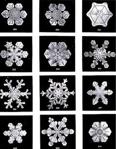 """Snow flakes by Wilson Bentley : """"Studies among the Snow Crystals, The Snowflake Man""""  from Annual Summary of the """"Monthly Weather Review"""" for 1902. Bentley was a bachelor  farmer whose hobby was photographing snow flakes."""
