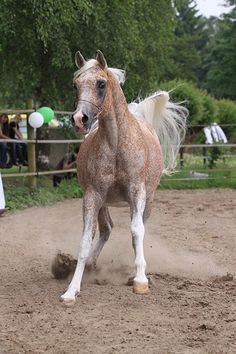 I want her!!!! I shall name her Freckles :3