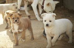 23 Pups Rescued from a Dog Meat Farm