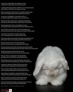 This adorable poem applies to all rescue animals - thank goodness for the people who devote their lives to rescue. The little bunny model's name is Milky who has a lovely home with her human Ella.