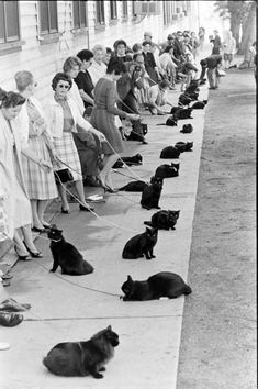 black cats lined up