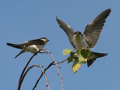Dos 'aviones' posados en una rama.