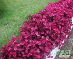 Plantas Ideais para Sol Pleno   Flores - Cultura Mix