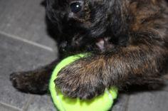 Puppy & ball
