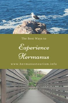 Welcome to the official travel and tourism website for Hermanus,Western Cape, South Africa. Sea Walk, Tourism Website, Travel And Tourism, Paths, Scenery, Walking, Birds, Adventure, Landscape