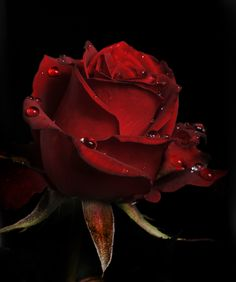 "500px / Photo ""Red Rose with raindrops"" by Cristobal Garciaferro Rubio"