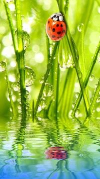 ideas plants photography nature dew drops for 2019 Beautiful Bugs, Amazing Nature, Beautiful Pictures, Beautiful Forest, Beautiful Creatures, Animals Beautiful, Cute Animals, Lady Bug, Photo Animaliere