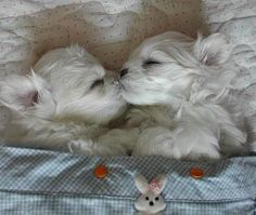 cute puppies pictures | Puppies Kissing | CuteStuff.co - Cute Animals, Cute Pictures, Cute ...