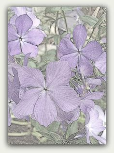 No waiting!  Instant Download Lavender Flowers Note Card / by GrammiesDrawers, $3.50
