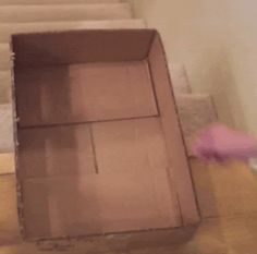 giflounge: I'm Out of Here | Funny Cat GIFs