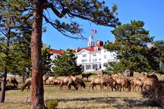 Mille Fiori Favoriti: The Stanley Hotel, Estes Park--America's Most Haunted Hotel? Halloween Ghost Decorations, Halloween Prop, Halloween Quotes, Happy Halloween, Abandoned Castles, Abandoned Mansions, Abandoned Places, Haunted House Props, Haunted Hotel