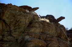 Tortoise rock formations.  Photo by Jean Howerton - please give credit.