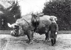 Boy with his boar, 1930s
