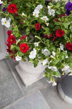 Tips til hvordan pynte ute til 17. mai | Inspirasjon fra Mester Grønn