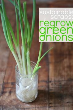 love part 2 of @17apart's brilliant *sustainable scraps* mini-series: how to reGROW green onions!