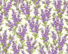 Rosemary Flowers - Cream