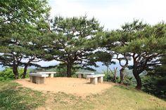 盆栽表松(旧 展望台の松) - WolMyeongDong(キリスト教福音宣教会)