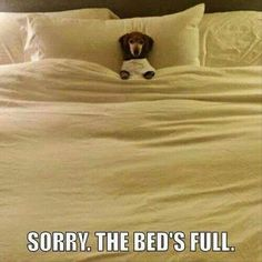 Very funny and cute collection of Dachshund dog pictures! funny horses, dog captions funny, dachshund through the snow Funny Animal Jokes, Cute Funny Animals, Animal Memes, Cute Baby Animals, Funny Cute, Funny Dogs, Cute Dogs, Hilarious, Animal Mashups