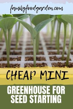 Instead of buying seeds for the garden consider starting your own seeds. It's fun and cheap. Family Food Portable Greenhouse, Backyard Greenhouse, Greenhouse Growing, Mini Greenhouse, Healthy Fruits And Vegetables, Winter Vegetables, Buy Seeds, Container Gardening, Flower Gardening