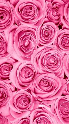 ideas for flowers background iphone pink rose wallpaper Iphone Hintegründe, Pink Iphone, Flower Backgrounds, Wallpaper Backgrounds, Iphone Backgrounds, Floral Wallpapers, Wallpaper Ideas, Iphone Wallpapers, Amazing Flowers