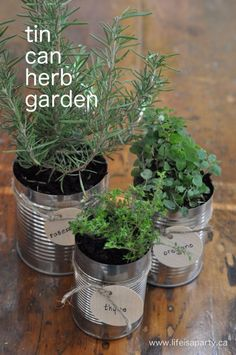 DIY Ideas With Old Tin Cans - Tin can Herb Garden - Rustic Farmhouse Decor Tutorials and Projects Made With An Old Tin Can - Easy Vintage Shelving, Wall Art, Picture Frames and Home Decor for Kitchen, Living Room and Bathroom - Creative Country Crafts, Craft Room Storage, Silverware Holder, Rustic Wall Art and Accessories to Make and Sell http://diyjoy.com/diy-projects-tin-cans