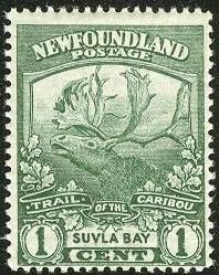 Newfoundland 1919 SG 137 Coningent Reindeer Fine Mint Scott 122 Other North American and British Commonwealth Stamps HERE! Timbre Canada, Newfoundland And Labrador, Small Words, Vintage Stamps, Mint, Stamp Collecting, Vintage Images, Art Forms, Reindeer