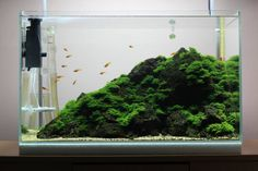 A new One by Penzes Zoltan from Hungary A wonderful Example how you can create a magnificent Effect with simple Tools. A must have for every living Room! Glass Aquarium, Nano Aquarium, Home Aquarium, Nature Aquarium, Aquarium Design, Planted Aquarium, Aquarium Fish, Aquarium Ideas, Betta Tank