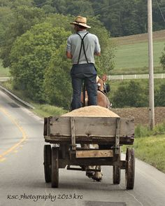 We have more and more Amish farmers in Kentucky each year. Their farms are beautiful! Amish Family, Amish Farm, Amish Country, Country Primitive, Amish Men, Holmes County, Amish Culture, Amish Community, Pennsylvania Dutch
