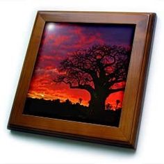 """African baobab tree, Tarangire National Park, Tanzania-AF45 AJE0264 - Adam Jones - 8x8 Framed Tile by 3dRose. $22.99. Keyhole in the back of frame allows for easy hanging.. Inset high gloss 6"""" x 6"""" ceramic tile.. Solid wood frame. Cherry Finish. Dimensions: 8"""" H x 8"""" W x 1/2"""" D. African baobab tree, Tarangire National Park, Tanzania-AF45 AJE0264 - Adam Jones Framed Tile is 8"""" x 8"""" with a 6"""" x 6"""" high gloss inset ceramic tile, surrounded by a solid wood frame with p..."""