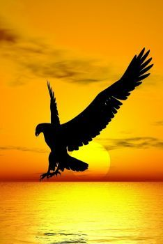Android Eagle Wallpaper Hd For Mobile Eagle Images, Eagle Pictures, Nature Pictures, Eagle Wallpaper, Animal Wallpaper, Nature Wallpaper, Beautiful Landscape Wallpaper, Beautiful Landscapes, Moon Photography