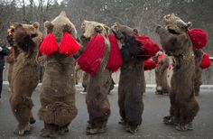 People wearing bear furs perform during a festival of New Year ritual dances attended by hundreds in Comanesti, northern Romania, Wednesday, December 30 (Photo by Vadim Ghirda/AP Photo) Romanian Gypsy, Ritual Dance, New Years Traditions, Gypsy Girls, December, Lion Sculpture, Around The Worlds, Furs, Traditional