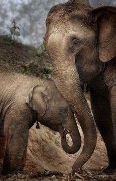Most precious gentle giants ❤