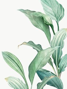 Hand drawn tropical leaves on a white background transparent png Watercolor Plants, Watercolor Leaves, Watercolor Paintings, Simple Watercolor, Tattoo Watercolor, Watercolor Animals, Watercolor Techniques, Watercolor Background, Watercolor Landscape