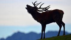 Zur vollendeten Nachahmung eines röhrenden Hirsches muss Tasso Wolzenburg noch an seiner Haltung arbeiten.