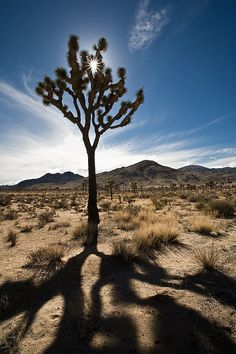 once more to Joshua Tree Nat Park