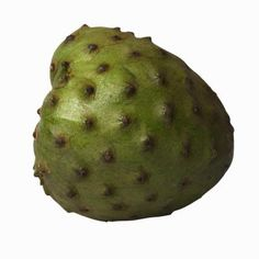 Cherimoya (Annona cherimola) makes an outstanding small landscape tree for gardeners in frost-free areas. While the flowers may not be considered beautiful, they have a pleasant fragrance, and the ...