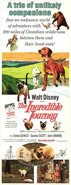 """""""The Incredible Journey"""" (1963)"""