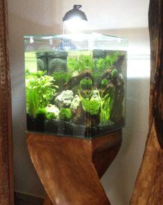 Aquastyle 24 EHEIM auf Holz Säule - Design und Lifestyle Einrichtung für Aquarium / Nano von AQUA AMBIENTE