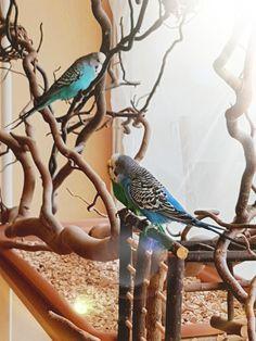 Bird Cage Design, Diy Bird Cage, Small Birds, Pet Birds, Ring Necked Parakeet, Monk Parakeet, Fairy Garden Furniture, African Grey Parrot, Conure