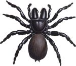 Good Spider, Bad Spider  Tells what type of spiders are out there!    Whatever the spider, if it's in the house, odds are good that it's going to be a dead spider.
