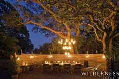 Busanga Bush Camp - The dining area is shaded by the canopy of a majestic tree from which an unusual lantern chandelier hangs. African Animals, African Safari, Lantern Chandelier, Lanterns, Safari Food, Belize Resorts, Wilderness, National Parks