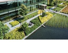 the design conveys the illusion of thick, dark earth underfoot_Bill & Melinda Gates Foundation Campus