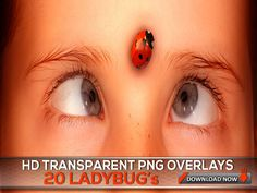 20 TRANSPARENT PNG Ladybug Overlays - Ladybug Photography Overlays, Ladybug Photoshop Overlay, Digital Background, Digital Backdrop