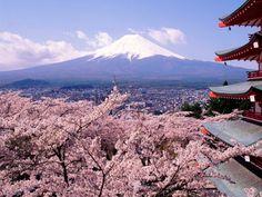 Florada das cerejeiras - Japão