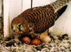 Nachwuchs & Küken - Adlerarena Burg Landskron Parrot, Owl, Animals, Golden Eagle, Nursing Care, Parrot Bird, Animales, Animaux, Owls